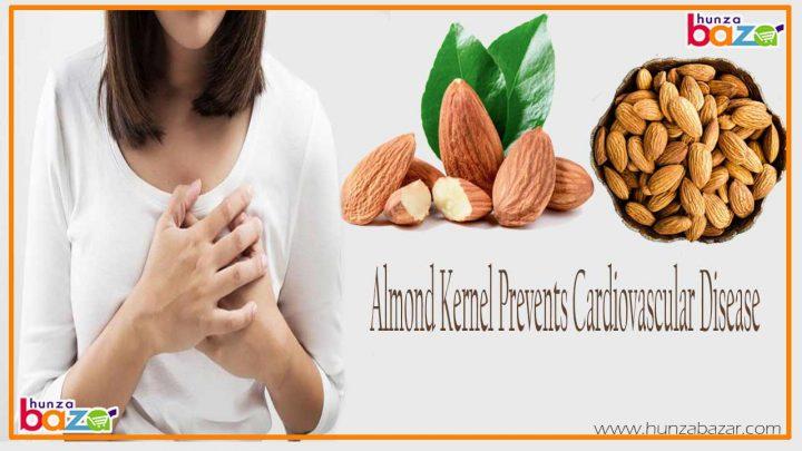 Almond Kernel Prevents Cardiovascular Disease
