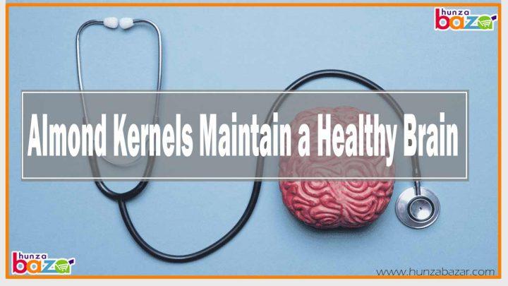 Almond Kernels Maintain a Healthy Brain